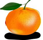 tangerine-151616_150